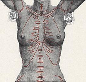 090824 anatomy